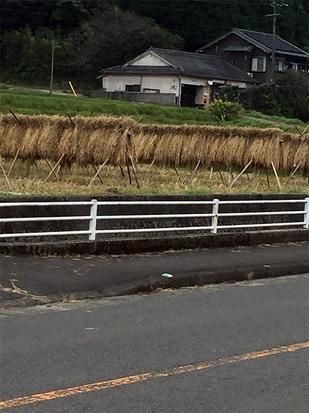 稲わら集め