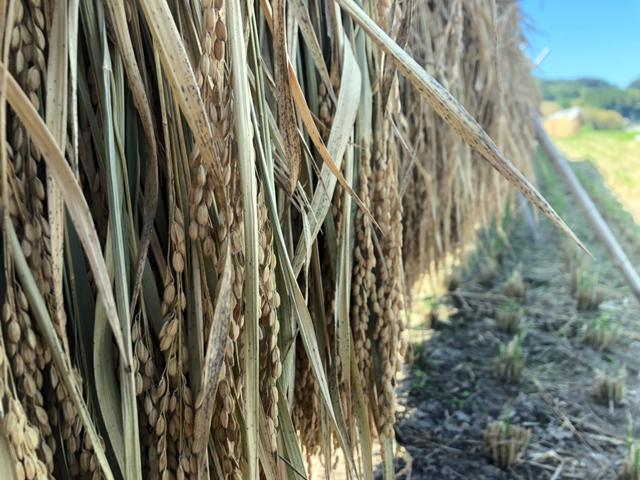 稲刈り作業終了