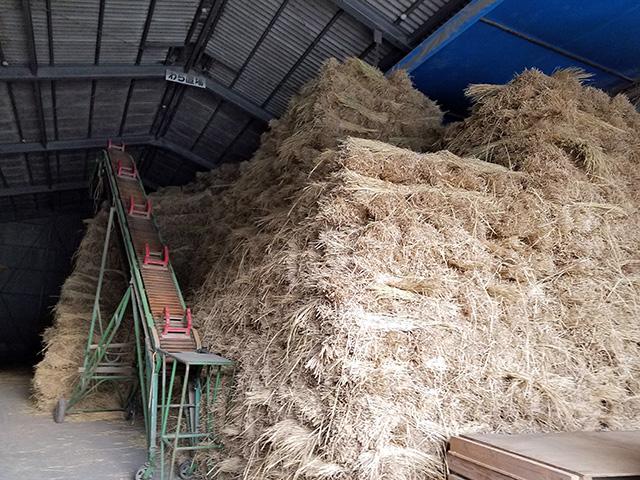 今年も稲わらたくさん集まりました