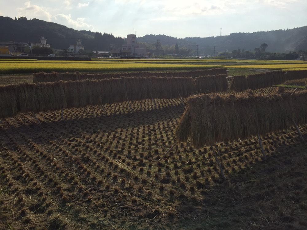 稲刈り作業終わりました